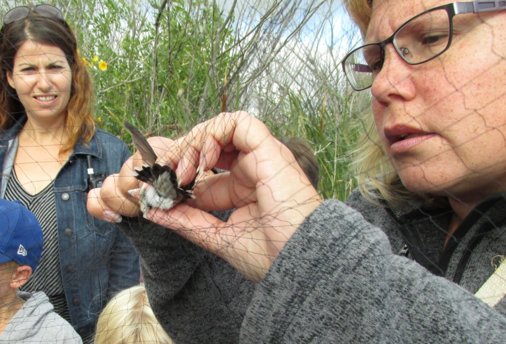 Banding with the Resident Naturalist