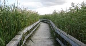 Boardwalk at the marsh