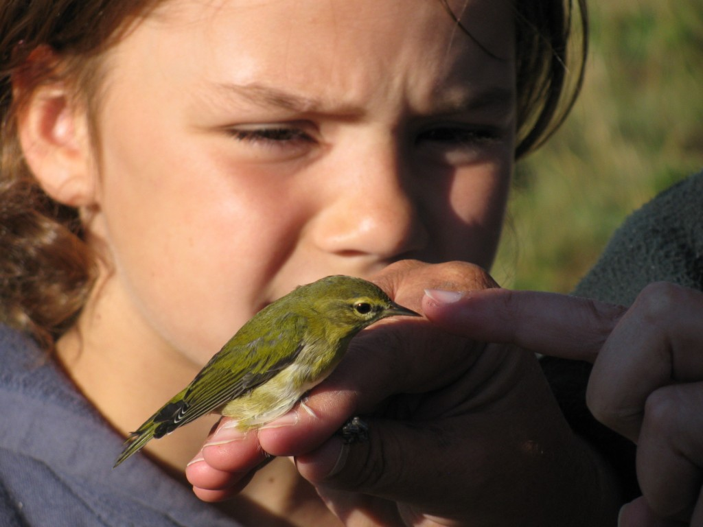 Bird banding close up