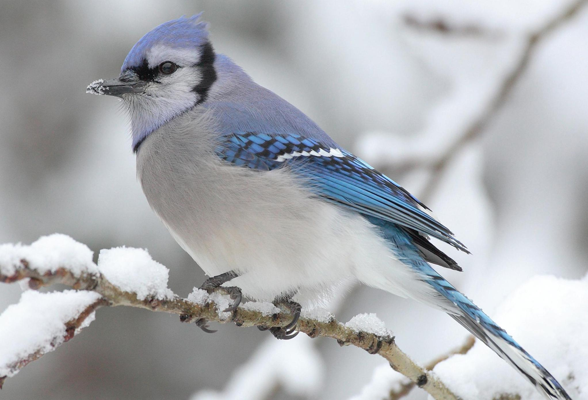 What are the wintering birds 38